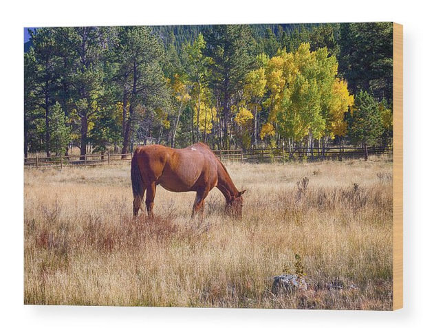 Autumn High Country Horse Grazing Wood Prints