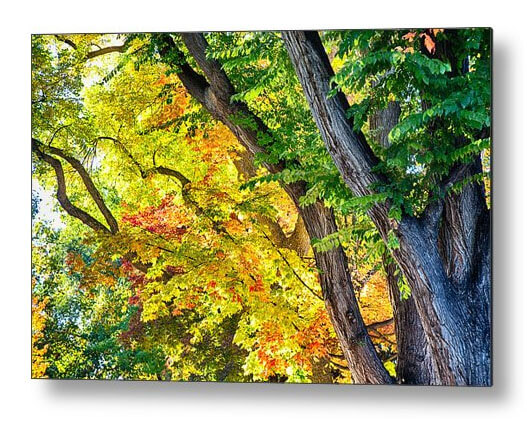 Season Leaves of Glory Metal Wall Art