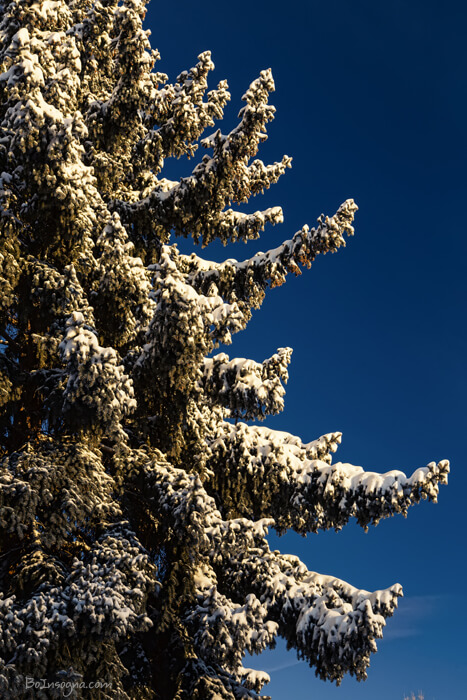 Blue Skies And Fresh Fallen Powder Art Prints Online
