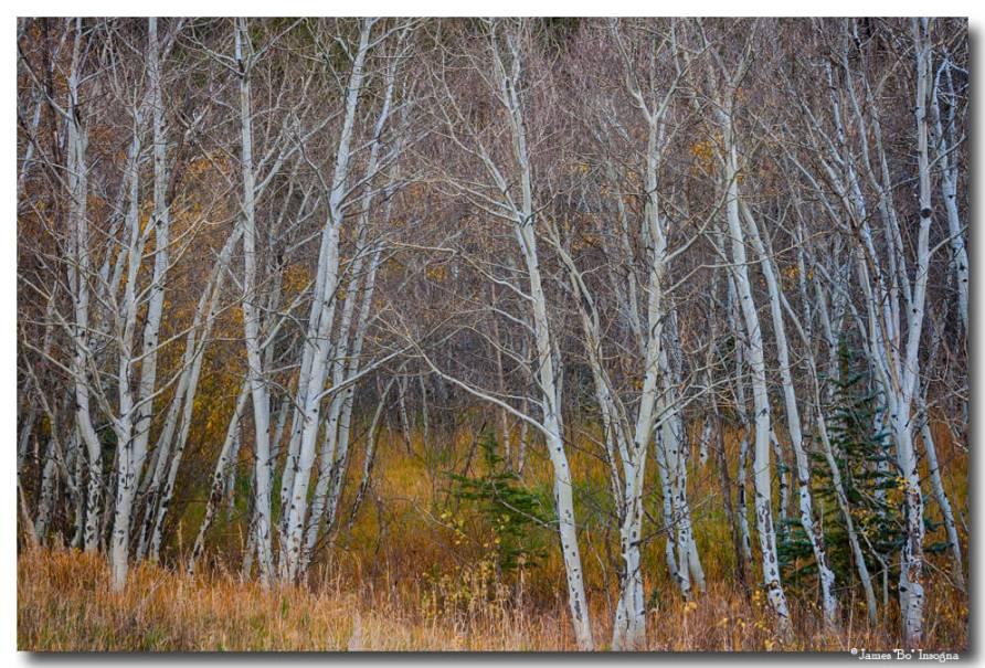 Walk In The Woods Art