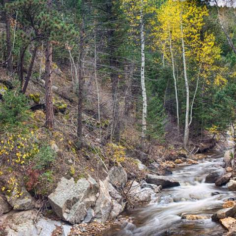 Looking Up the South St Vrain Canyon