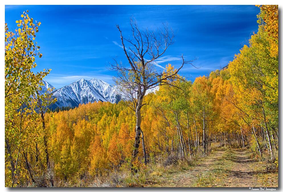 Colorado Autumn Back Country View