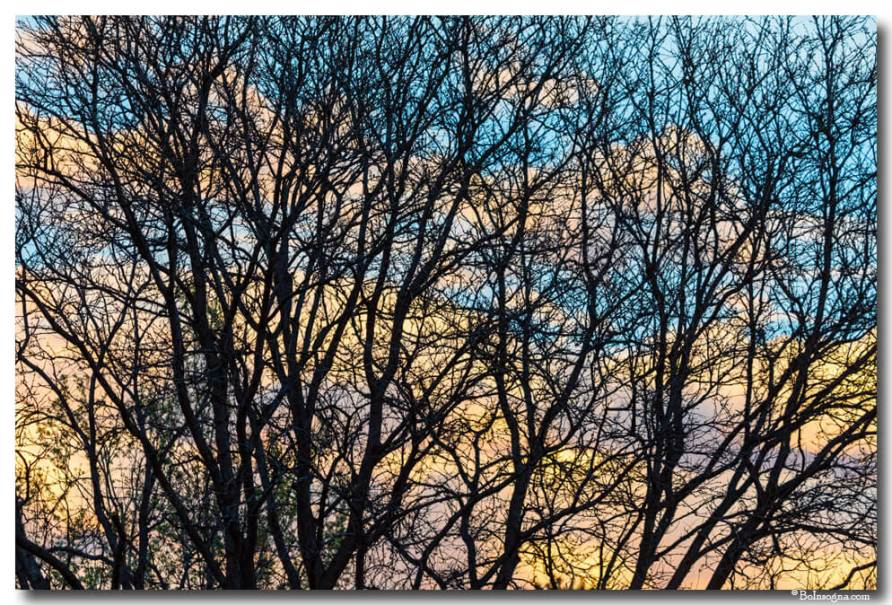 Colorful Clouds Through Tree Branches Art Prints