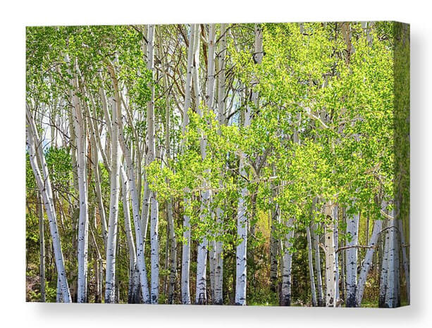 Colorful Wilderness Canvas Print