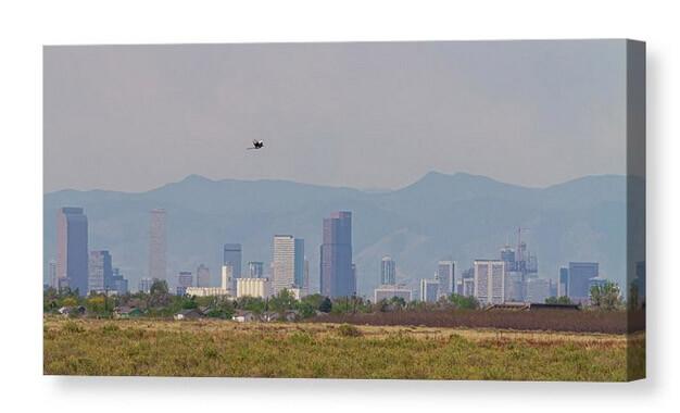 Pretty Bird Downtown Denver Colorado Fly By