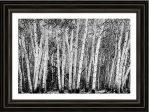 Pillars Of The Wilderness Framed Print