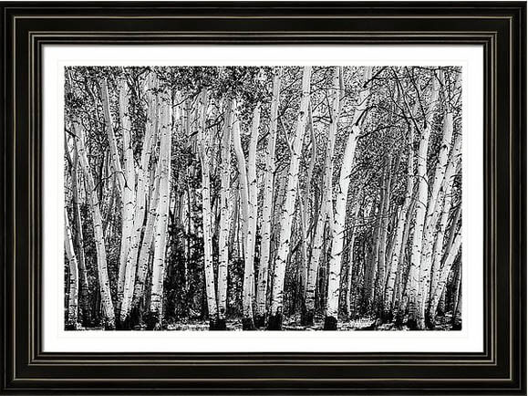 Colorado Wilderness Pillars – Monochrome Print