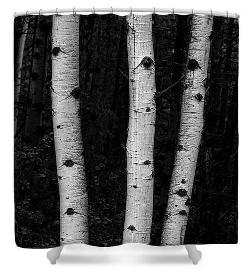 Black and White Aspen Forest Shower Curtain