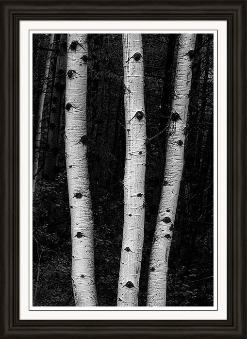 Nature Out Of Darkness A Black and White Print