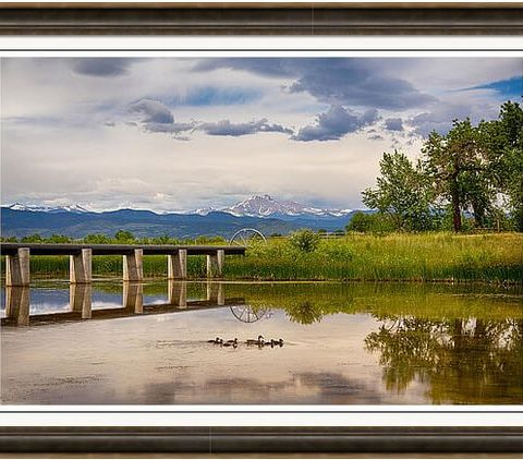 A Ducky Kind Of Day Framed Print