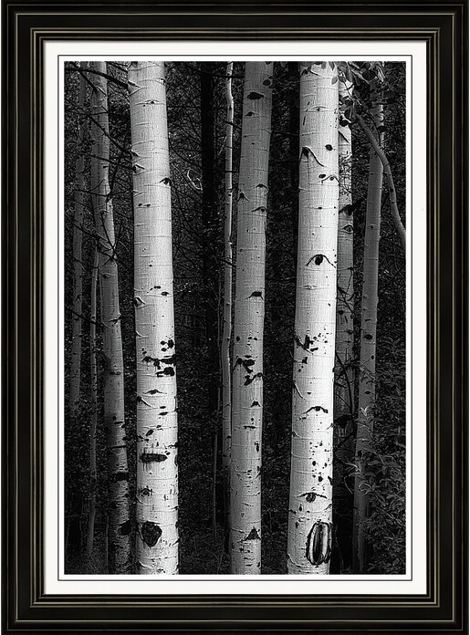 Monochrome Wilderness Wonders Framed Prints