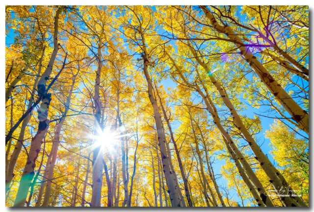 Colorado Autumn Sunshine Art Print