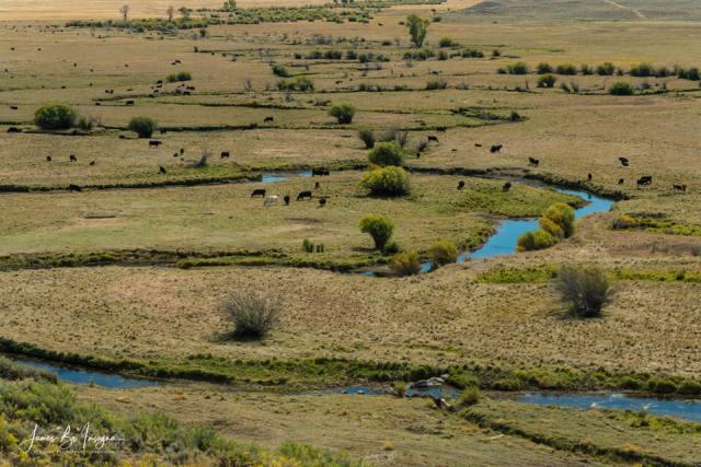 Cattle Country Landscape Art Print