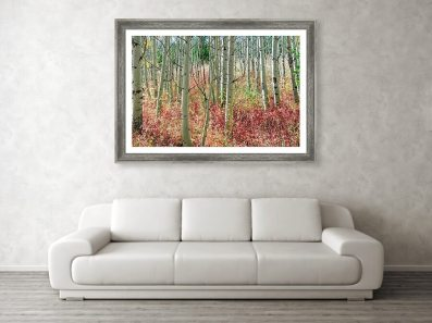 aspen-tree-trunks-and-burning-reds-framed-prints