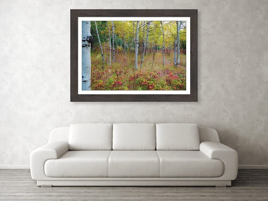 Fall Foliage Forest Delight New Landscape Print