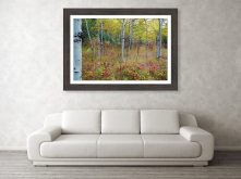 fall-foliage-forest-delight-landscape-james-bo-insogna
