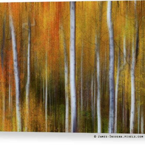 Forest Color Burst Modern Abstract Canvas Print