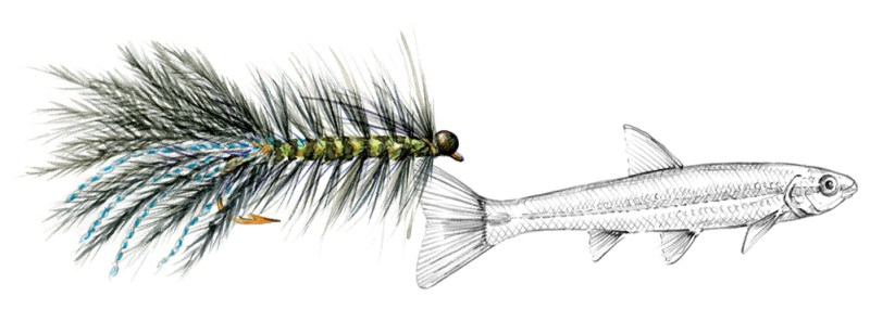 WOOLLY BUGGER illustration. Copyright Marjorie Leggitt