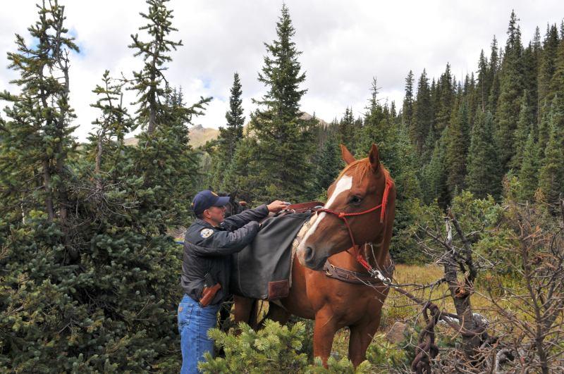 Unloading horse