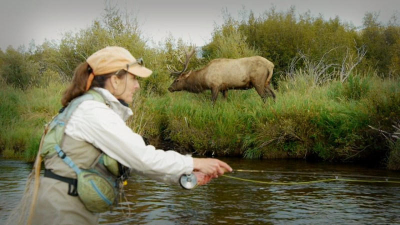 A bull elk ventures near the water's edge. Video capture by Jerry Neal/CPW