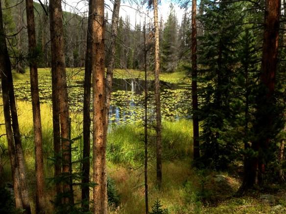Colorado moose habitat.