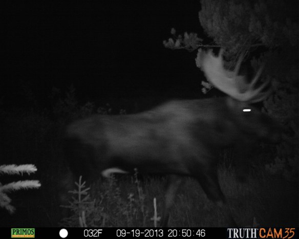 Trail-cams are an excellent tool for big-game hunters.