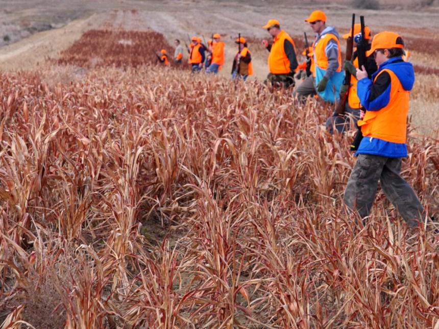 A large group of pheasant hunters marches across a field. Photo by Jerry Neal/CPW.