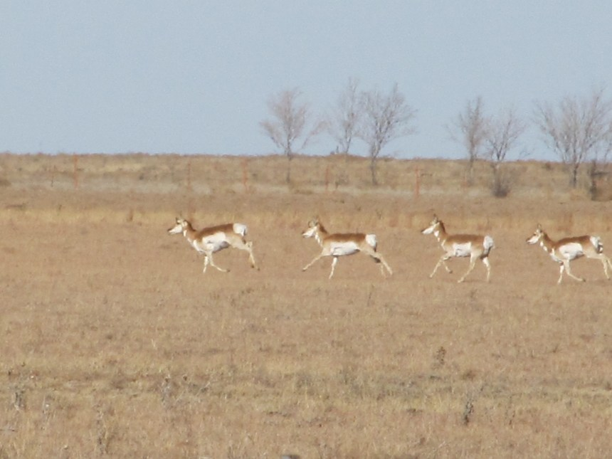 IMG_1264-Antelope Hunt-Dec12
