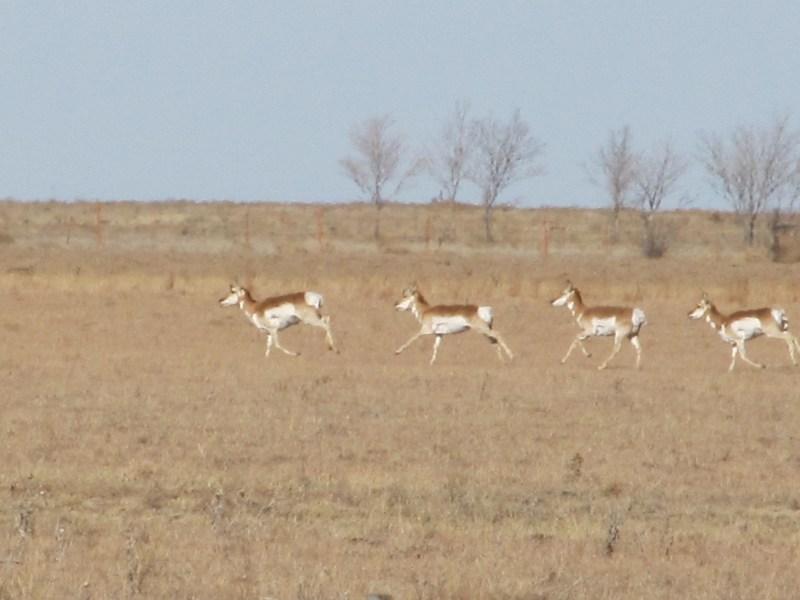 IMG_1264-Antelope Hunt-Dec12