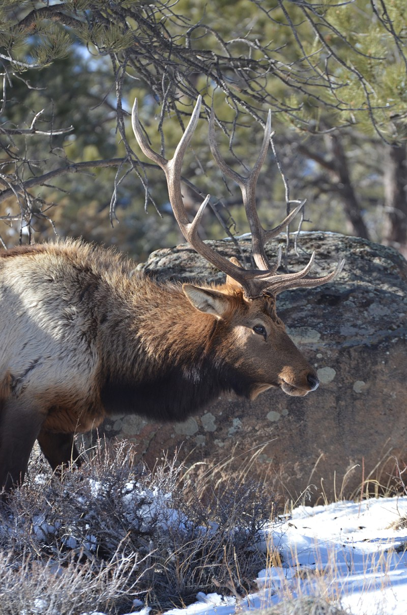 The author's quest for an elk has just begun.