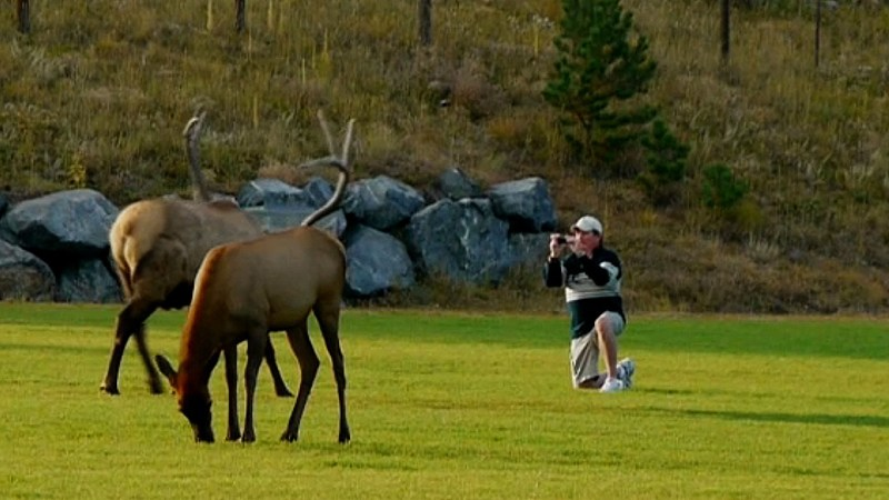 A bull elk threatens a guy with a cell phone. Video capture by Jerry Neal/CPW.
