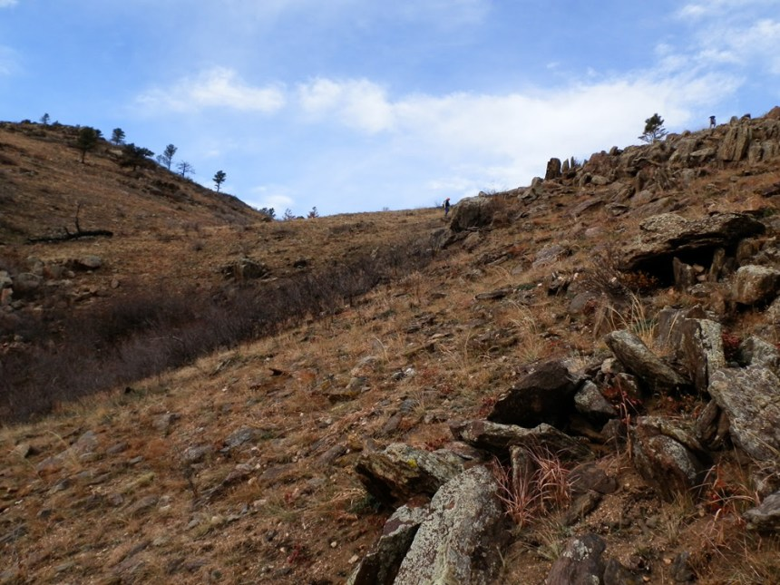 The combination of steep, grassy hillsides and rocky outcroppings of the Poudre Canyon provides near-perfect habitat for chukar.  Photo by Manda Walters/CPW.