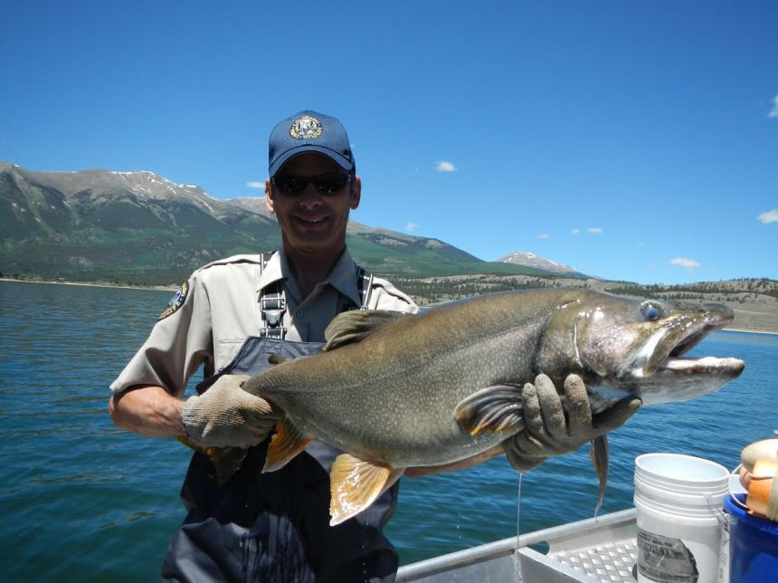 A CPW biologist with a Twin Lakes Mackinaw. Photo by CPW.