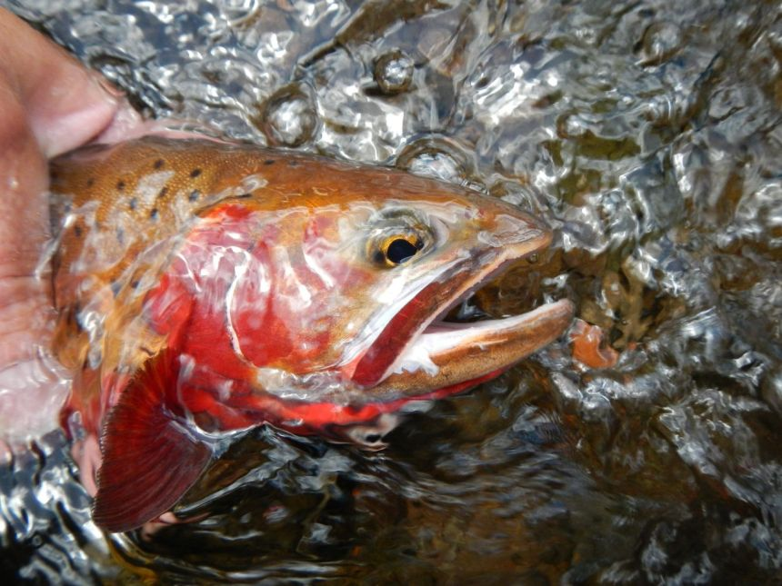 Colorado s top springtime fishing destinations colorado for Best trout fishing in ct