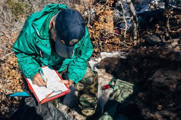 CPW-durango-bear-research-19