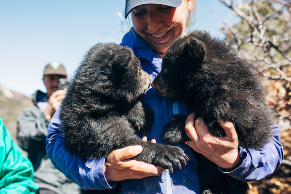 CPW-durango-bear-research-37