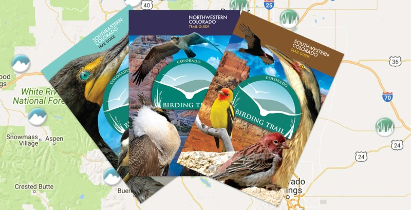 CO Birding Trail books