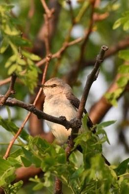 mockingbird-Wayne-D-Lewis-DSC_0632