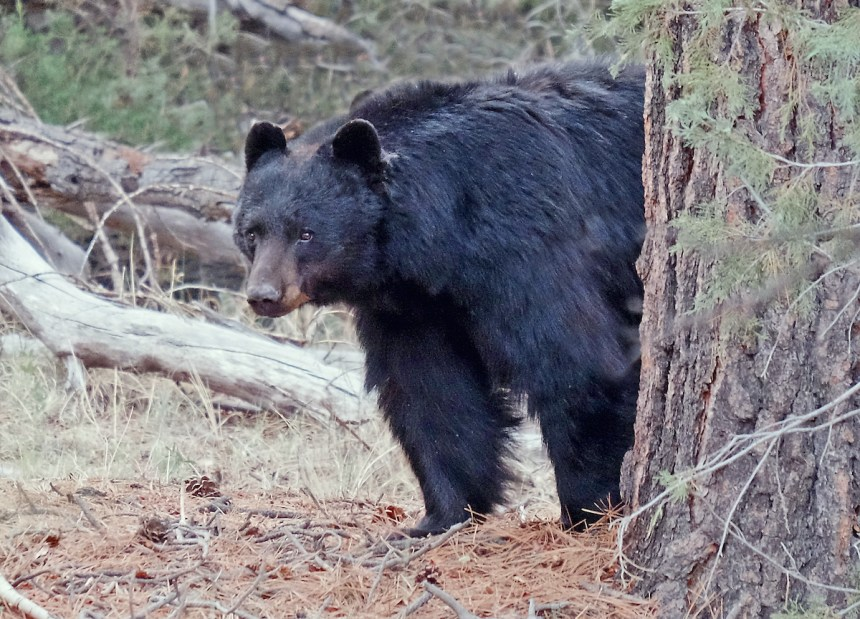 10 Tips For Colorado Bear Hunters - Colorado Outdoors Online