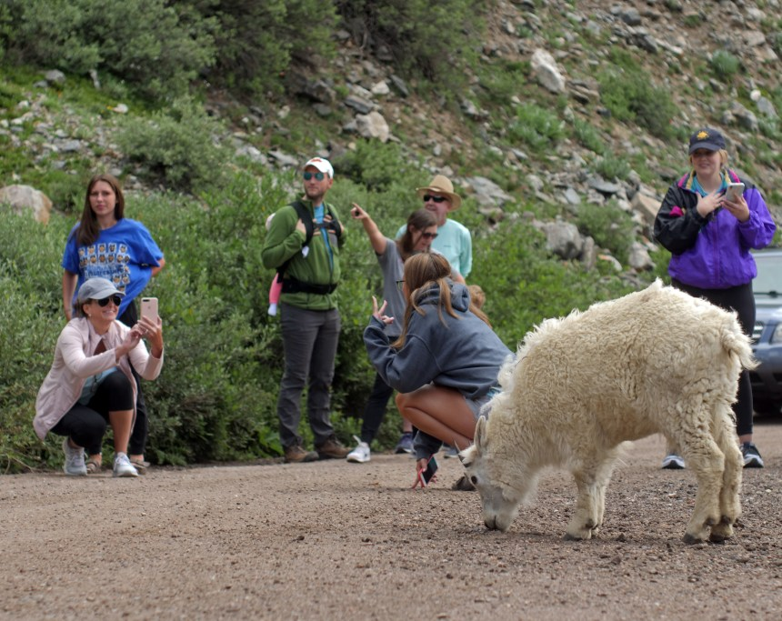 Mountain Goats and more people