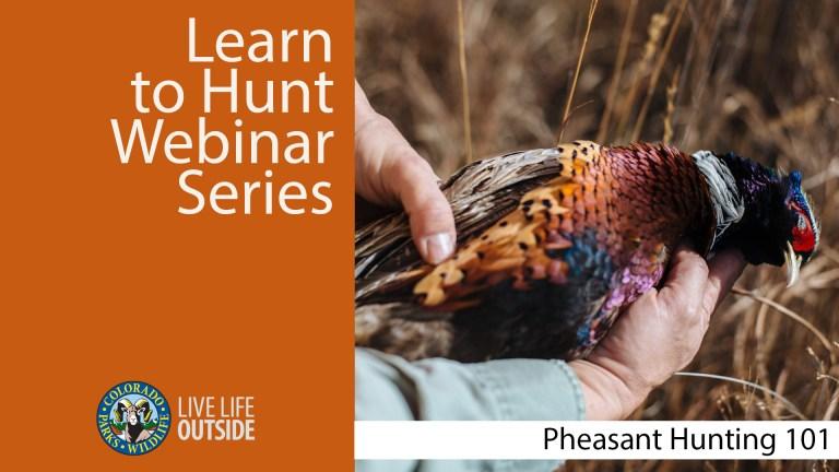 pheasant Hunting 101 Webinar