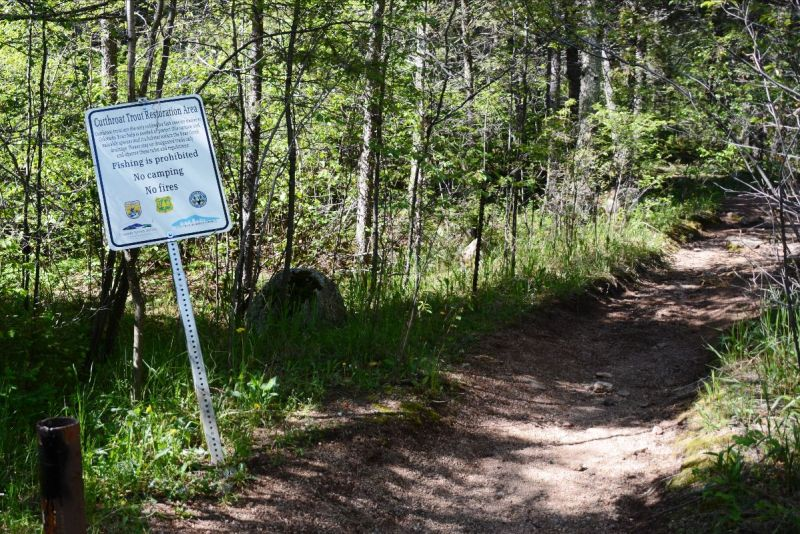 Signs warn campers, anglers, hikers and bikers of the protected 3 1/2-mile stretch of Bear Creek that is home to the threatened greenback cutthroat trout.