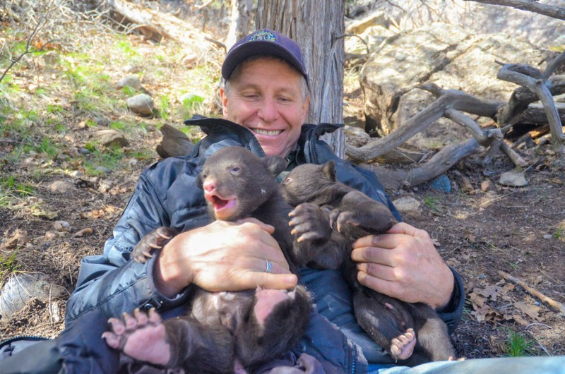 Joe Lewandowski with bear cubs.