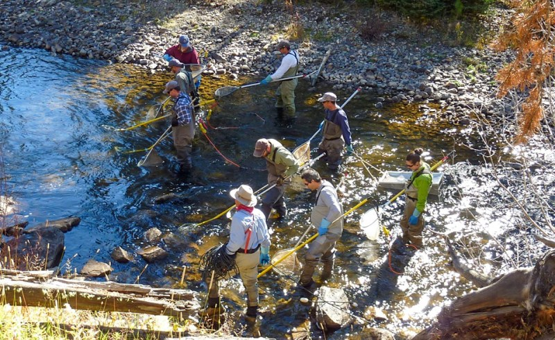 team conducts electrofishing survey