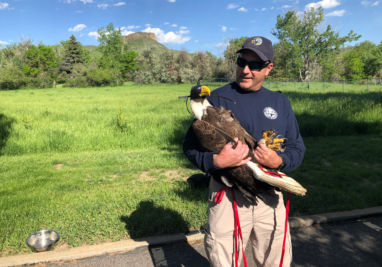 Lance Carpenter prepares tp release eagle