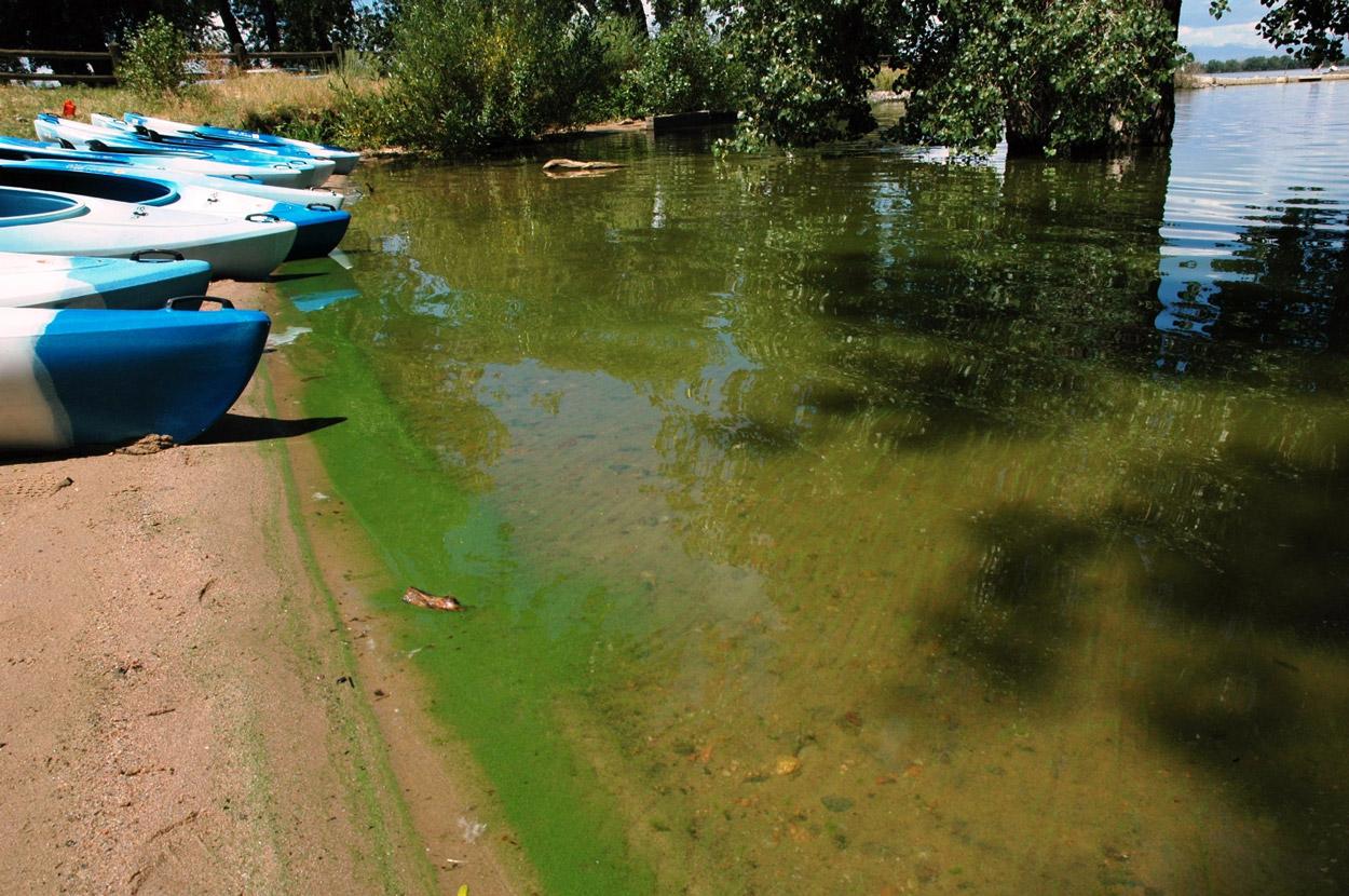 blue-green algae bloom