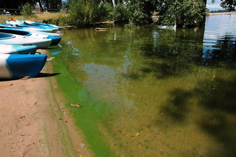 Photo of a blue-green algae bloom