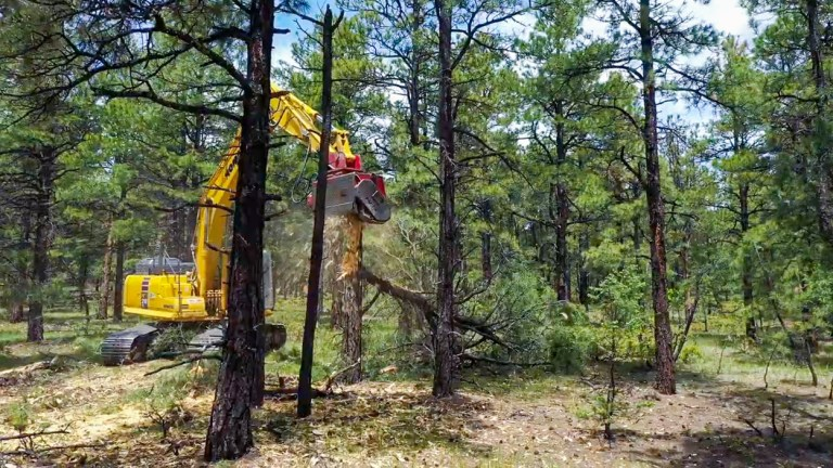 A large excavator equipped with a head that shreds trees into pulp works its way through the Spanish Peaks State Wildlife Area