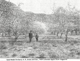 orchard 2