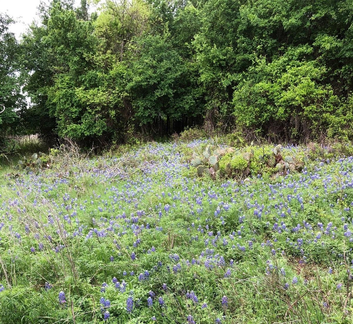 Bauerle Ranch at Slaughter Creek Greenbelt
